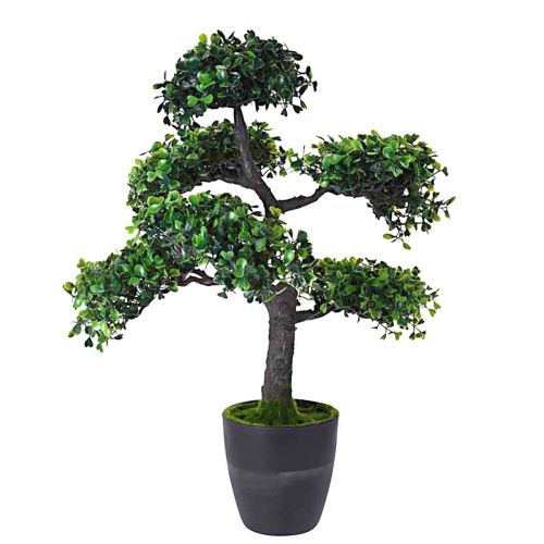 Bonsai Puu 50cm