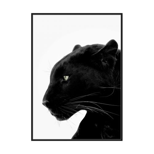 CANVAS PANTHER 60X90