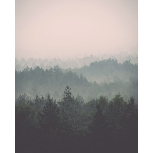 JULISTE MISTY FOREST 40X50
