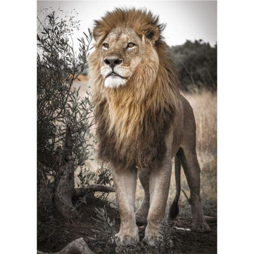 PREMIUM COLLECTION PROUD LION 500 PALAA